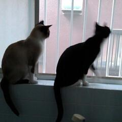 姉弟猫/雨季ウキフォト投稿キャンペーン/フォロー大歓迎/LIMIAペット同好会/にゃんこ同好会/うちの子ベストショット 虫さん ゲットしたよ🐱 お風呂場からお外…