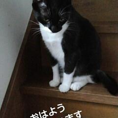 にゃんこ同好会/猫の気持ち/にゃんこ日めくり おはようございます🐱 7月26日 日曜日…