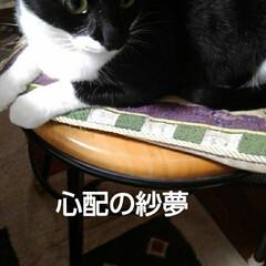 猫の気持ち/猫のいる生活/白黒猫 私が具合の悪いときに 紗夢が心配そうに見…(3枚目)