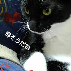 白黒猫/にゃんこ同好会/にゃんこ日めくり おはようございます🐱 雨降りの月曜日 3…(2枚目)