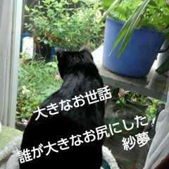 猫のいる生活/にゃんこ同好会/にゃんこ日めくり/猫の気持ち おはようございます ものすごいどしゃ降り…(3枚目)