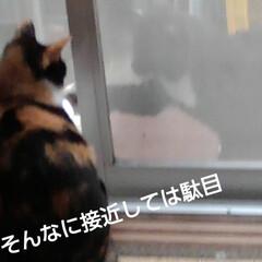 猫のいる生活 網戸越しに可愛い事してました あら、いけ…(3枚目)