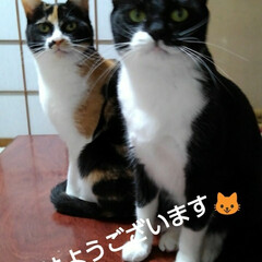 姉弟猫/にゃんこ同好会/にゃんこ日めくり おはようございます🐱 今日はとても良い天…