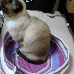猫ベッド/リミアの冬暮らし 新しい物好きな皆さま 早速、入ってくれま…