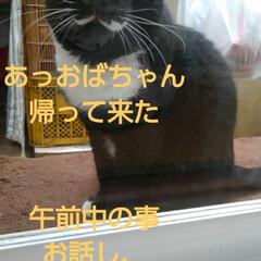 白黒猫/フォロー大歓迎 雨降りの月曜日です  午前中は縁側で紗夢…
