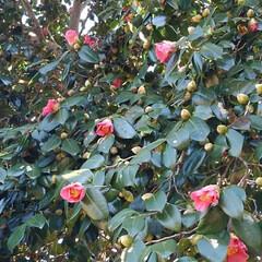 花のある暮らし/春 畑にも春が来ましたよ~🌸🌸🌸 (お花連投…(2枚目)