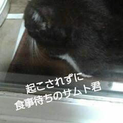 白黒猫/にゃんこ同好会 サムト君がニャルソック終えご飯待ち ご飯…