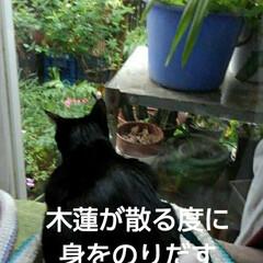 猫のいる生活/にゃんこ同好会/にゃんこ日めくり/猫の気持ち おはようございます ものすごいどしゃ降り…(5枚目)