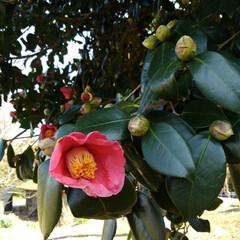 花のある暮らし/春 畑にも春が来ましたよ~🌸🌸🌸 (お花連投…(3枚目)