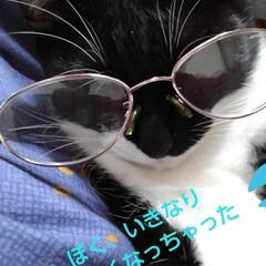 白黒猫 眼鏡紗夢  お母さんに遊ばれてます