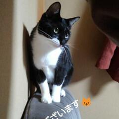ご挨拶/にゃんこ日めくり/白黒猫/フォロー大歓迎 おはようございます🐱 1月25日 土曜日…
