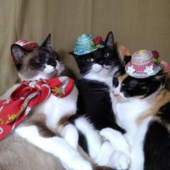 三姉弟/猫/撮影会/仲良し/令和元年フォト投稿キャンペーン/フォロー大歓迎/... 早速被ってみました 人のものが良く見えて…