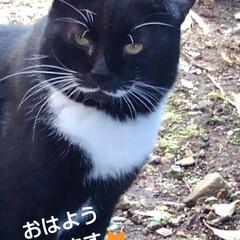 にゃんこ同好会/リミアペット同好会/お見送り/白黒猫/リミアの冬暮らし おはようございます🐱 寒くなりましたね …