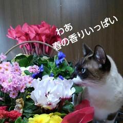 花のある暮らし/にゃんこ同好会 昨日は娘達から時間差攻撃で お花が届きま…(1枚目)