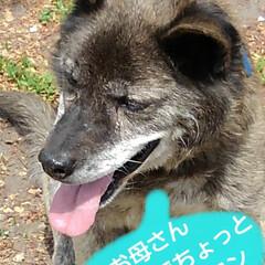 犬🐶/お散歩 一年半ほど前のもの うーちゃんがご近所に…