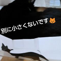 猫のいる生活 昨日の事 三匹が交代で箱入りさんしてました(2枚目)