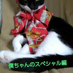 猫/白黒猫/フォロー大歓迎/朱色 紗夢 調子良く撮り始めたら いきなりお眠…