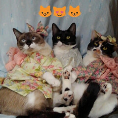 にゃんこ同好会/猫/三姉弟/フォロー大歓迎 令和2年1月1日 一年の最初の朝です 皆…