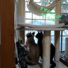 猫/三姉弟/仲良し/見張り隊/フォロー大歓迎 今朝は 今にも雨が落ちて来そうな空模様 …