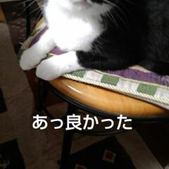 猫の気持ち/猫のいる生活/白黒猫 私が具合の悪いときに 紗夢が心配そうに見…(4枚目)
