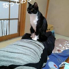 猫のいる生活/白黒猫/にゃんこ同好会 紗夢ちゃん マッサージ出来ました🙀