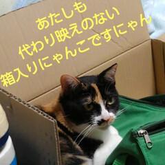 猫のいる生活/ねこ/にゃんこ同好会 毎度、 お馴染みの箱入り息子&娘  飽き…(2枚目)