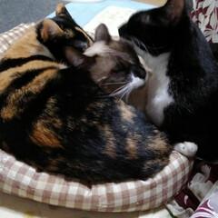猫/三姉弟/リミアの冬暮らし 消えてるストーブの前の 3にゃんず