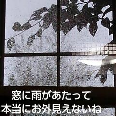 三兄弟 おはようございます🐱🐱🐱  今日も天気予…(2枚目)