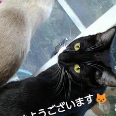 ご挨拶/白黒猫 おはようございます🐱