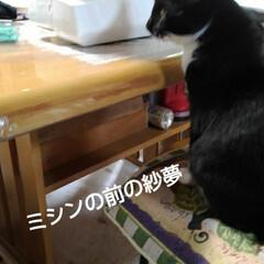 猫の気持ち/にゃんこ同好会 昨日の紗夢 ミシンの前にちょこんと座って…