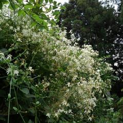 風景 畑にある百合の花  これは夏の終わりに咲…(9枚目)