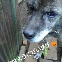 ワンコ同好会/犬 おはようございます🐱 令和1年12月31…(1枚目)