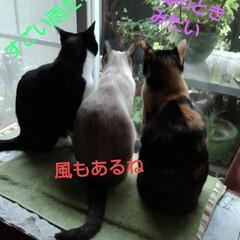 雨/仲良し/猫/三姉弟/フォロー大歓迎 お早うございます 雨風の強い火曜日の朝 …