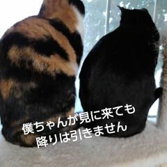 三兄弟 おはようございます🐱🐱🐱  今日も天気予…(3枚目)