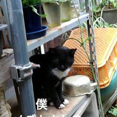 猫のいる暮らし/にゃんこ同好会/にゃんこ日めくり おはようございます 昨日よりましな涼しい…(2枚目)