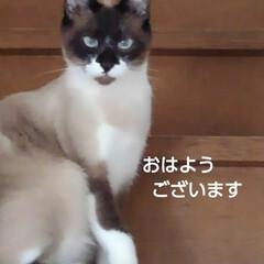 猫の気持ち/にゃんこ同好会/にゃんこ日めくり おはようございます🐱 6月4日 木曜日の…