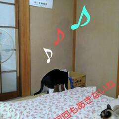 猫の気持ち/にゃんこ同好会/にゃんこ日めくり/ダイソー/梅雨/梅雨対策/... おはようございます 7月5日 日曜日です…(9枚目)