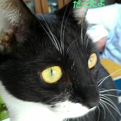 白黒猫/宅急便/フォロー大歓迎/LIMIAペット同好会/にゃんこ同好会 瑠月が心配していたのは 宅急便やさんでし…