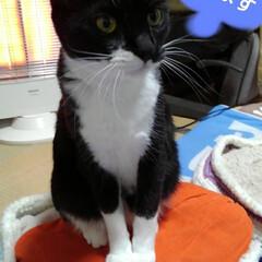 白黒猫/にゃんこ日めくり/にゃんこ同好会 おはようございます🐱 1月19日  日曜…