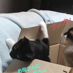 猫のいる生活/にゃんこ同好会/ねこ 箱入り息子と箱入り娘が喧嘩して 仲直りし…(6枚目)