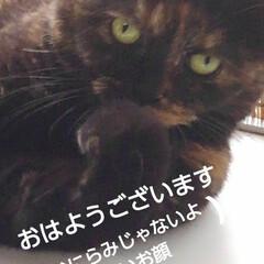 猫のいる生活/にゃんこ日めくり おはようございます🐱 7月20日 月曜日…