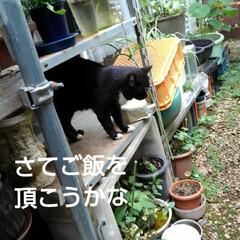 猫のいる暮らし/にゃんこ同好会/にゃんこ日めくり おはようございます 昨日よりましな涼しい…(3枚目)