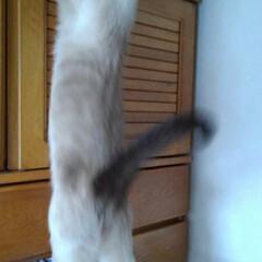猫/お手伝い/写真/フォロー大歓迎/LIMIAペット同好会/にゃんこ同好会/... お手伝いの続き 寝ていたものの私を監督す…(3枚目)