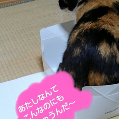 猫のいる暮らし/ねこ/にゃんこ同好会 雨の日  お暇な人(3️⃣にゃんず)達が…(5枚目)