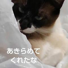 猫のいる暮らし/姉妹猫/にゃ~同好会 昨日の瑠月と紗羅(4枚目)