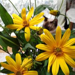 ねこのいる生活/ねこ/にゃんこ同好会/花がある暮らし お父さんが畑から にゃんずに猫じゃらしを…(2枚目)