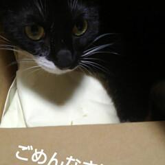 白黒猫/にゃんこ同好会/梅雨/梅雨対策/雨対策/梅雨対策アイテム/... 雨の午前中 にゃんずのごはんを出したあと…(5枚目)