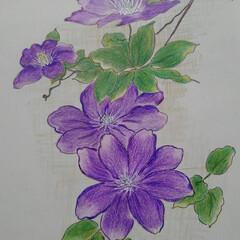 花のある暮らし/初夏 紫陽花やテッセン  初夏を彩る代表作とし…(1枚目)