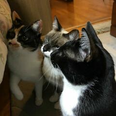 猫/三姉弟 真剣になに見てるのかな?