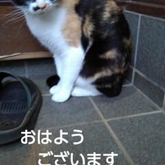 三毛猫/猫のいる生活/にゃんこ同好会/にゃんこ日めくり おはようございます 今日は良い天気です …(1枚目)